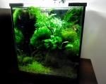 Mini akwarium